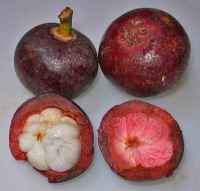 "4 Tamarind fruits aka ""Garcinia Cambogia"""